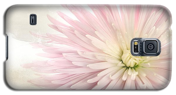 Pink Chrysanthemum Galaxy S5 Case by Karen Lynch