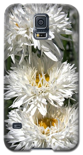 Galaxy S5 Case featuring the photograph Chrysanthemum Named Crazy Daisy by J McCombie