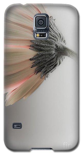 Chrysanthemum Petals 1 Galaxy S5 Case