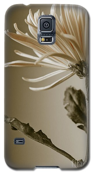 Chrysanthemum Petals 2  Galaxy S5 Case
