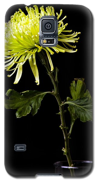 Galaxy S5 Case featuring the photograph Chrysanthemum by Sennie Pierson