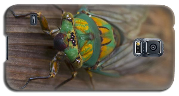Green Whizzer Cicada Galaxy S5 Case