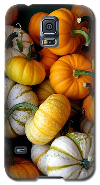 Cinderella Pumpkin Pile Galaxy S5 Case by Kerri Mortenson