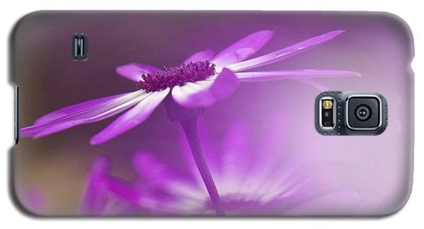 Galaxy S5 Case featuring the photograph Cineraria by Inge Riis McDonald