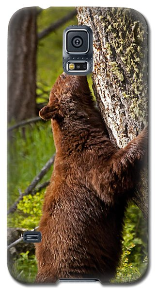 Galaxy S5 Case featuring the photograph Cinnamon Boar Black Bear by J L Woody Wooden