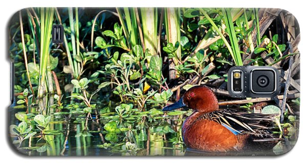 Cinnamon Teal And Dragonfly Galaxy S5 Case