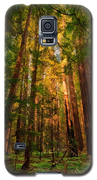 Circle Of Light - California Redwoods Galaxy S5 Case