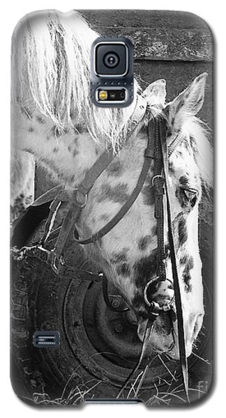 Circus Pony Galaxy S5 Case