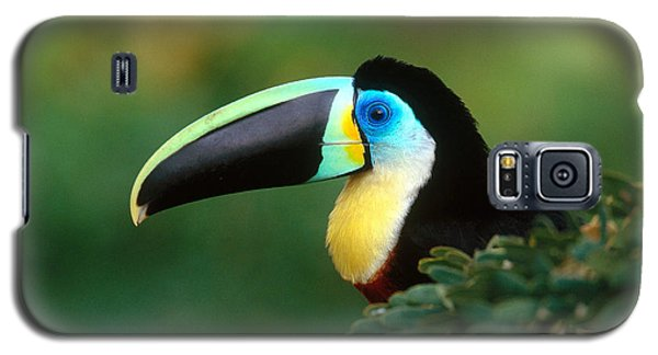 Citron-throated Toucan Galaxy S5 Case by Art Wolfe