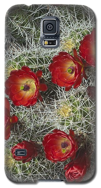 Galaxy S5 Case featuring the photograph Claret Cactus - Vertical by Gregory Scott