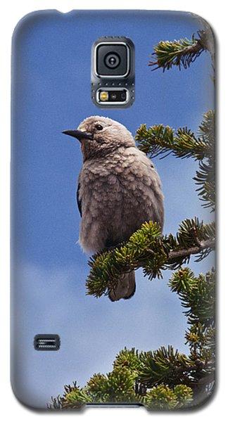 Clark's Nutcracker In A Fir Tree Galaxy S5 Case