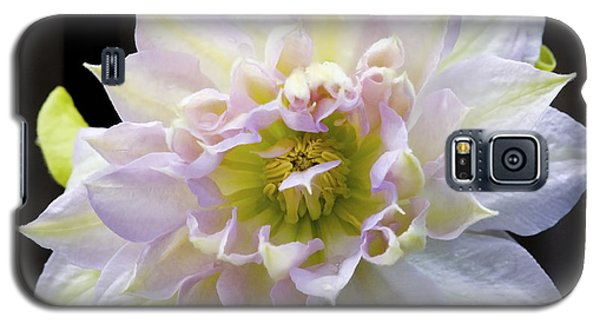 Clematis 'belle Of Woking' Galaxy S5 Case