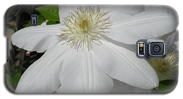 Clematis - Madame Le Coultre Galaxy S5 Case