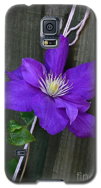 Clematis On A String Galaxy S5 Case
