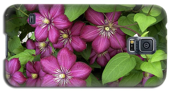 Galaxy S5 Case featuring the photograph Clematis by Penny Lisowski