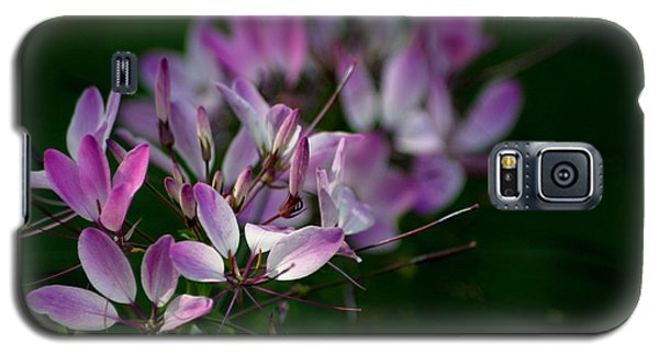 Cleome Galaxy S5 Case by Living Color Photography Lorraine Lynch