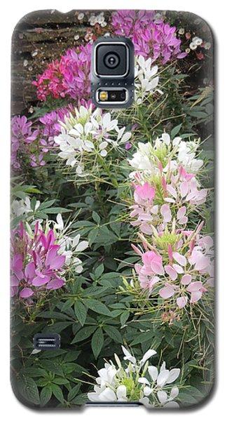 Cleome - Spider Flower Galaxy S5 Case