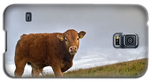 Cliffs Of Moher Brown Cow Galaxy S5 Case