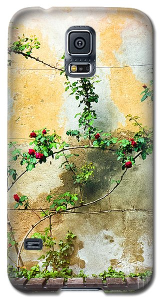 Galaxy S5 Case featuring the photograph Climbing Rose Plant by Silvia Ganora