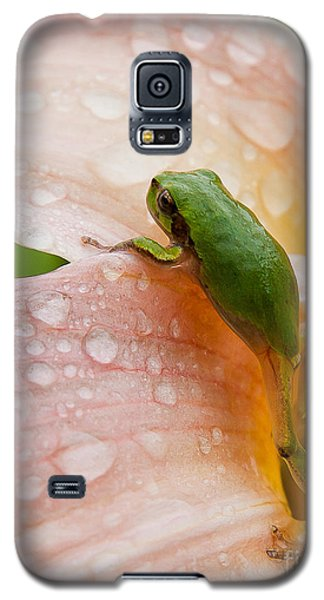 Climbing Up Galaxy S5 Case