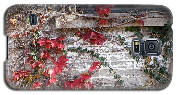 Galaxy S5 Case featuring the photograph Clinging Vine by Suzanne McKay