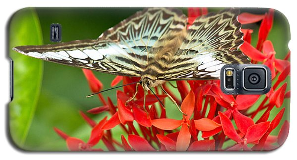 Clipper Butterfly Galaxy S5 Case by Scott Carruthers
