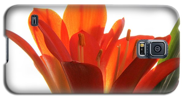 Galaxy S5 Case featuring the photograph Clivia by Jivko Nakev