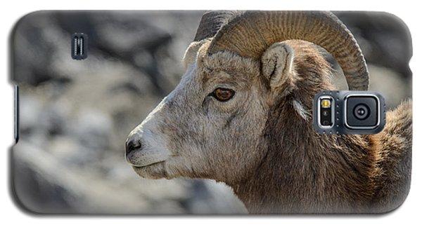 Close Big Horn Sheep  Galaxy S5 Case