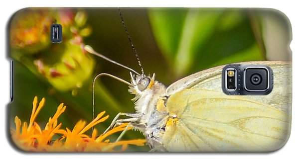 Galaxy S5 Case featuring the photograph Butterfly Attracted To Mexican Flame by Debra Martz