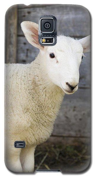 Sheep Galaxy S5 Case - Close Up Of A Baby Lamb by Michael Interisano