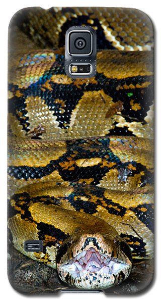 Close-up Of A Boa Constrictor, Arenal Galaxy S5 Case by Panoramic Images
