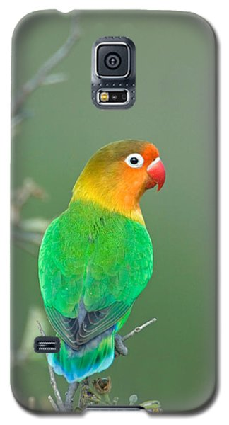 Lovebird Galaxy S5 Case - Close-up Of A Fischers Lovebird by Panoramic Images