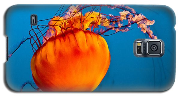 Galaxy S5 Case featuring the photograph Close Up Of A Sea Nettle Jellyfis by Eti Reid