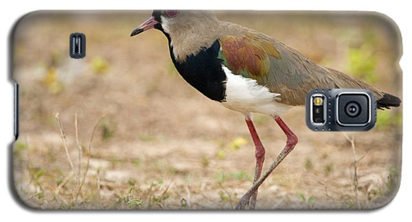 Close-up Of A Southern Lapwing Vanellus Galaxy S5 Case