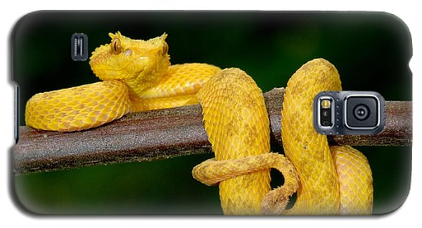 Brown Snake Galaxy S5 Case - Close-up Of An Eyelash Viper by Panoramic Images