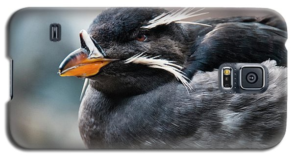 Auklets Galaxy S5 Case - Close-up Of Rhinoceros Auklet by Turner Forte