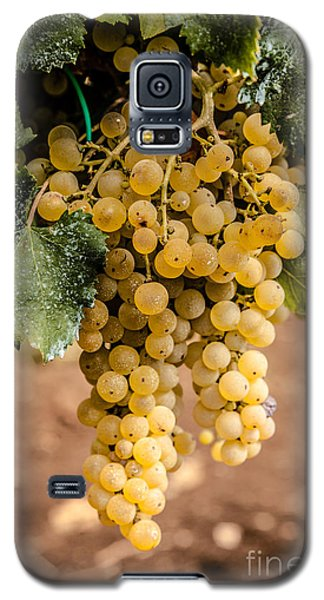 Close Up Of Ripe Wine Grapes On The Vine Ready For Harvesting Galaxy S5 Case