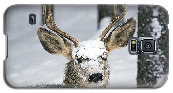 Close Up Of Winter Buck Galaxy S5 Case