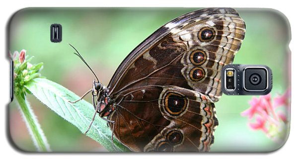 Closed Blue Morpho Galaxy S5 Case by Denyse Duhaime