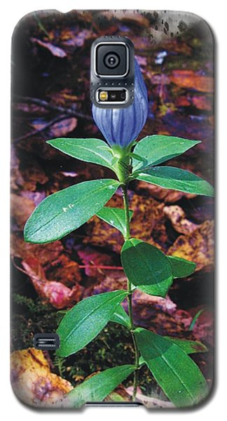 Closed Gentian Galaxy S5 Case