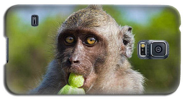 Closeup Monkey Eating Cucumber Galaxy S5 Case