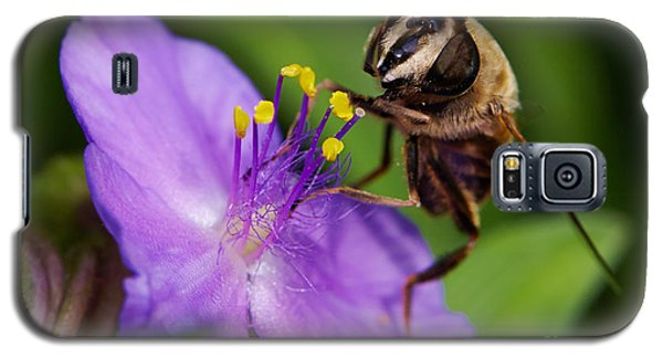 Closeup Of A Bee On A Purple Flower Galaxy S5 Case by Nick  Biemans
