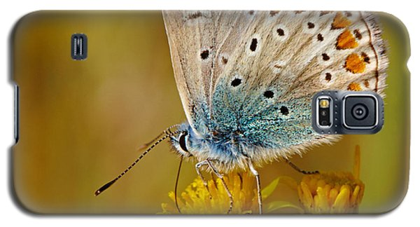 Galaxy S5 Case featuring the photograph Closeup Of A Common Blue Butterfly by Nick  Biemans