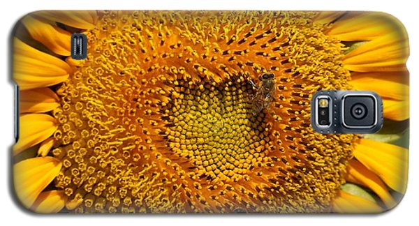 Closeup Of A Radiant Sunflower Galaxy S5 Case by Yali Shi