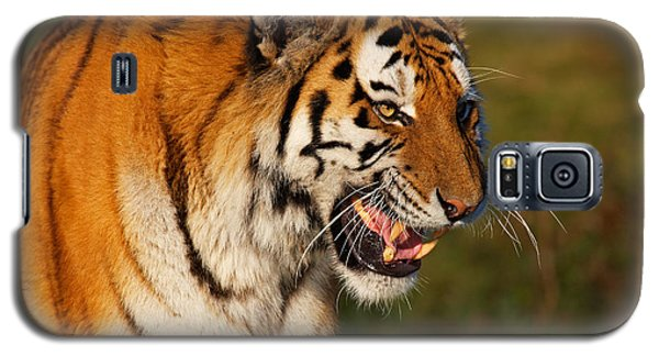 Galaxy S5 Case featuring the photograph Closeup Portrait Of A Siberian Tiger  by Nick  Biemans