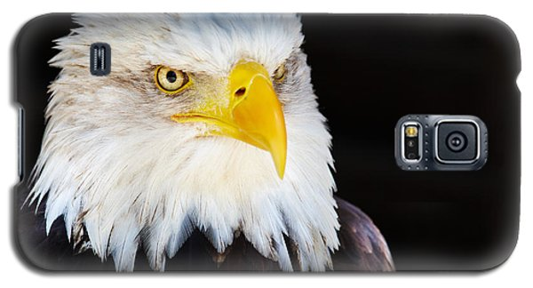 Galaxy S5 Case featuring the photograph Closeup Portrait Of An American Bald Eagle by Nick  Biemans