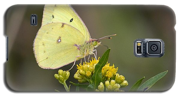 Galaxy S5 Case featuring the photograph Clouded Sulphur by Randy Bodkins