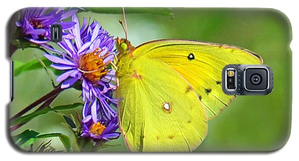 Galaxy S5 Case featuring the photograph Clouded Sulphur by Rodney Campbell