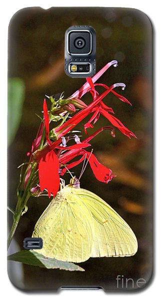 Cloudless Sulphur On Cardinal Flower Galaxy S5 Case by Susi Stroud