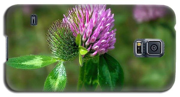Clover - Wildflower Galaxy S5 Case by Henry Kowalski